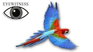 EYEWITNESS | Bird | US Version feat. Martin Sheen | S1E2