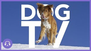 Dog TV: 8 Hours of Exciting Dog Entertainment! (NEW)