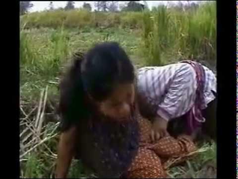 donna violentata in campagna