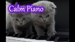 【BGM】Calm Piano Music (from YouTube Audio Library)