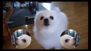 песня с белой собакой