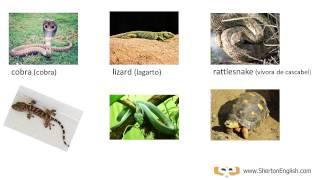 vocabulario ingls reptiles anfibios reptiles amphibians