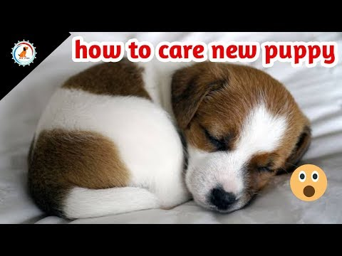How to take care of a new puppy ( caring tips )/ In Hindi / new puppy ki dekhbhal kaise kare