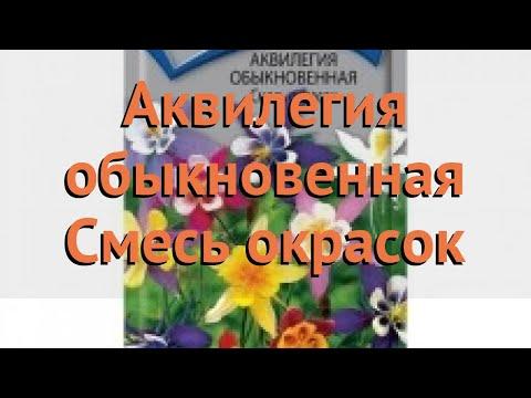 Аквилегия обыкновенная Смесь окрасок 🌿 обзор: как сажать, семена аквилегии Смесь окрасок