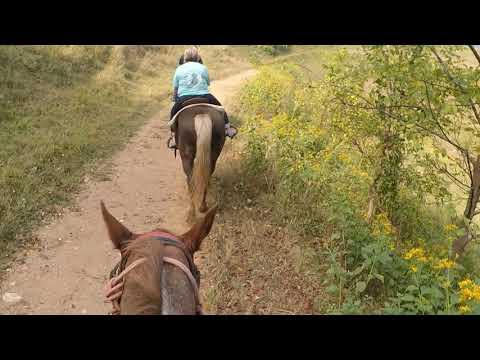 Horse back ride and gem mining...