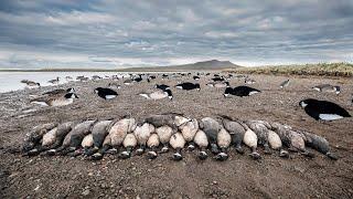 INSANE Alaska Brant Hunting (Double Bands & Limits)