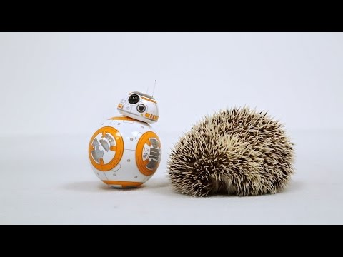 BB-8 and the Spiky Friend