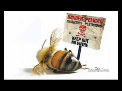 The U.S. Bans GMOs, Bee-Killing Pesticides in All Wildlife Refuges