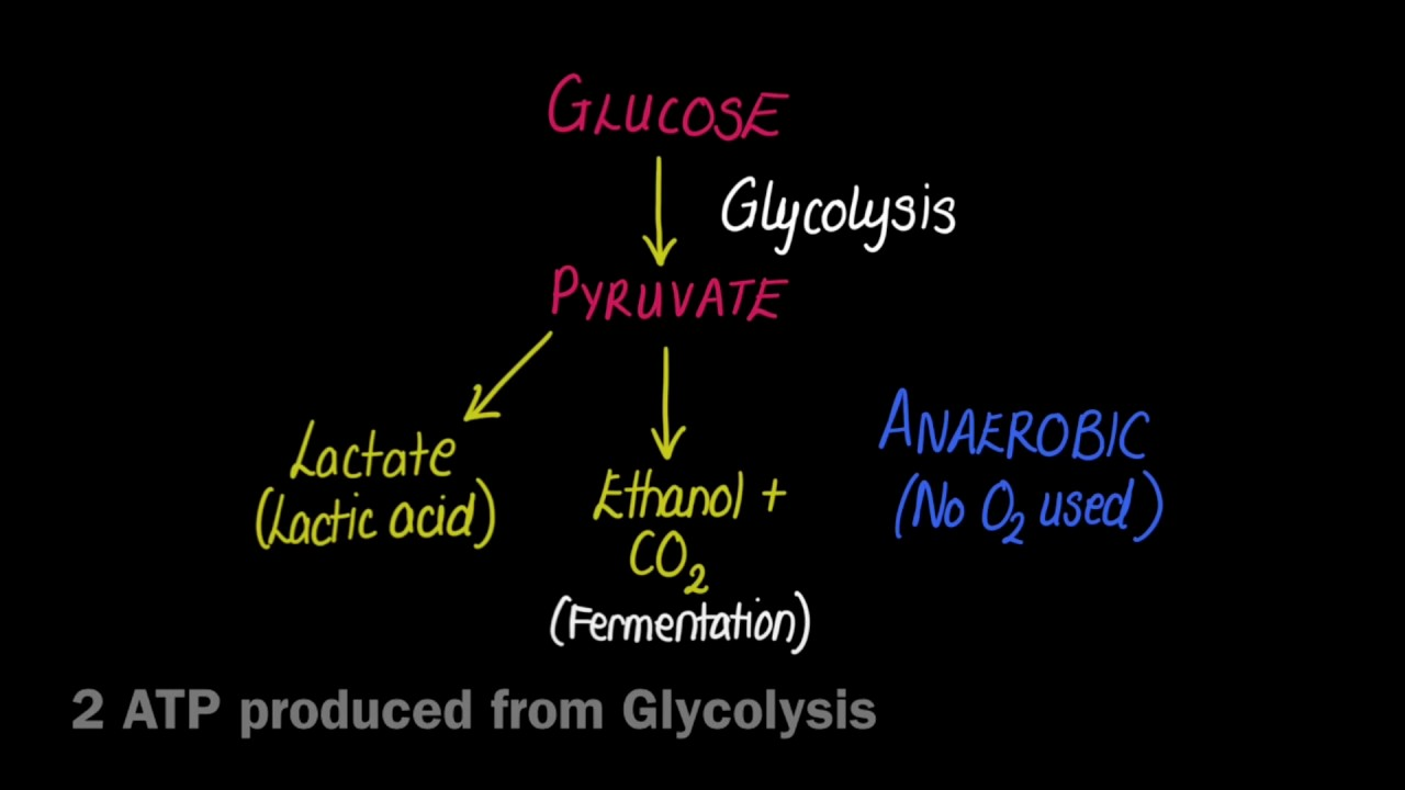 what does anaerobic respiration require