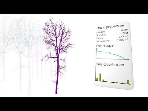 3D Forest Information