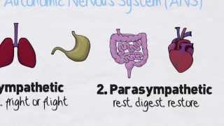 The Stress Response and Your Autonomic Nervous System