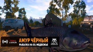 Русская Рыбалка 4 Амур чёрный на Медвежьем озере
