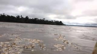 El río Napo en Ecuador subiendo de caudal