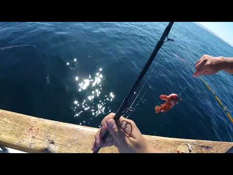 Rockfish Fishing Off The California Coast