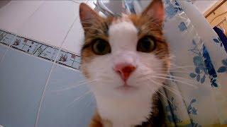 Кошка знакомится с экшн камерой / Cat sniffs action camera
