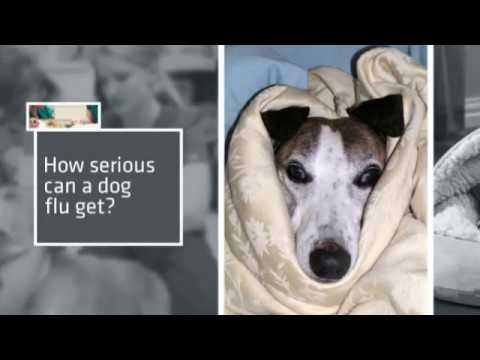 Thumbnail for 3 Things you can do to avoid your dog catching a cold