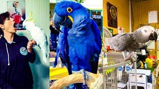 BIRDS TALKING LIKE HUMANS #3