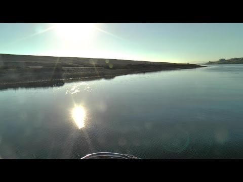 The Fleet Lagoon & Chesil Beach, World Heritage site, Little Terns