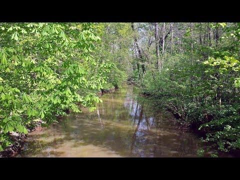 Auenwald leipzig ein spaziergang bei bestem wetter for Auenwald leipzig
