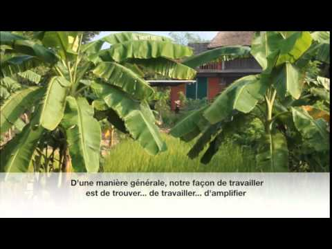 L'agroécologie, initiatives en Australie, Inde et Japon (permaculture, agriculture biologique)