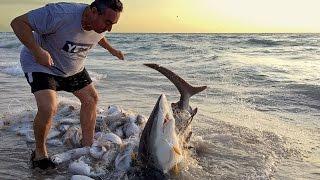 Hombre se arriesga para salvar a tiburón en Hollywood