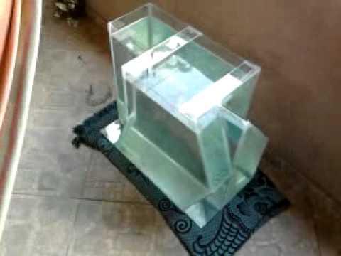 diseo acuario poligonal guardera ciclidos