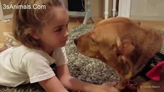 Dog and baby showing love together -  Cute dogs trying to kissing Babies Compilation
