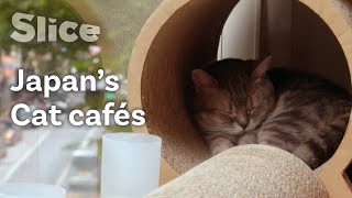 The Tokyo Cat Café Experience | SLICE