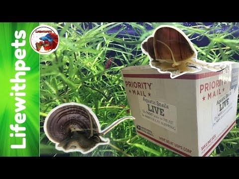 Unboxing Rare Color Mystery Snails.