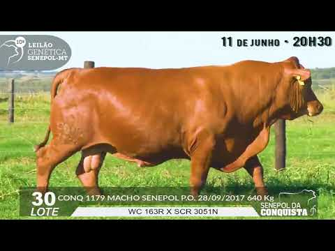 LOTE 30   CONQ 1179