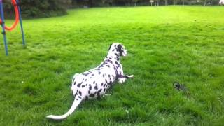 Train Your Dog:long Distance Stay Down