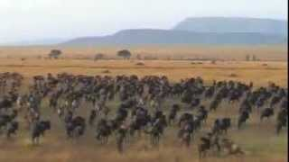 Tanzania safari highlights (Selous and Serengeti national park, Ngorongoro Conservation Area)