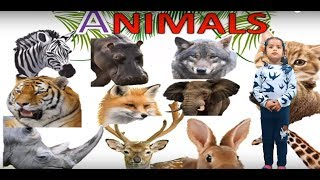 Learn Animals Name Easily