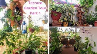 Terrace Garden Tour Part-1   Terrace garden overview  Summer Garden tour  Backyard Gardening