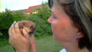 Ronélle Kissing Archie - Pomeranian Puppy - Like Boo The Cutest Dog In World