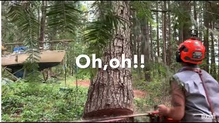 Tree felling- this can't go wrong,  TuaTahi axe unboxed