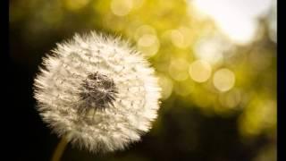 Audioslave Dandelion.mp3