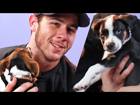 Nick Jonas Plays With Puppies (While Answering Fan Questions)