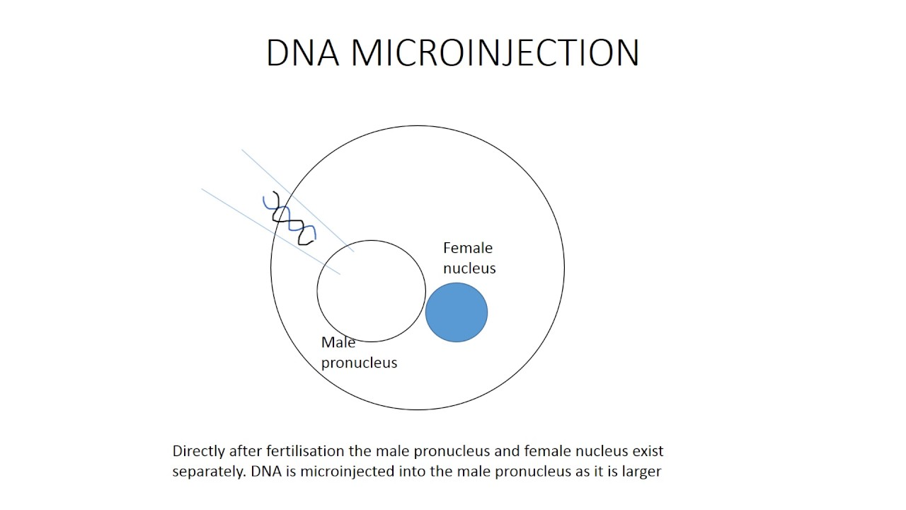 dna microinjection youtube