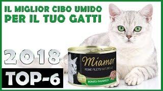 Il Miglior 🔥 Cibo Umido Per Gatti 😸 TOP-6 🔥