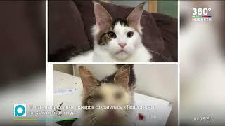 Скандал в Воронеже  породистую кошку за 500 тыс  нашли в кустах на обочине