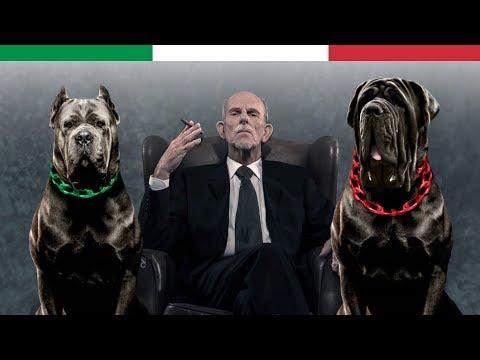 THE 10 ITALIAN DOG BREEDS