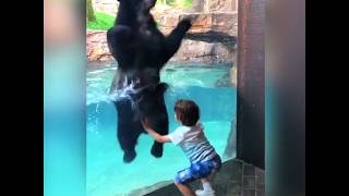 Funny Animals Dance ���� ���� ����
