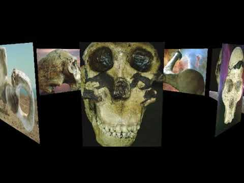 Origin of Species in Dub HD: Light Will be Thrown