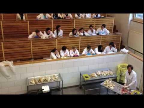 Veterinarian School Confused!?