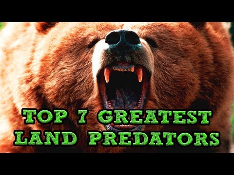 Top 7 Greatest Land Predators