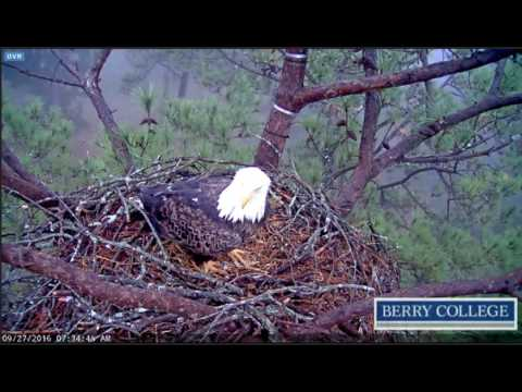 Berry College Eagles - Fog, Dad, Mom - 09/27/2016