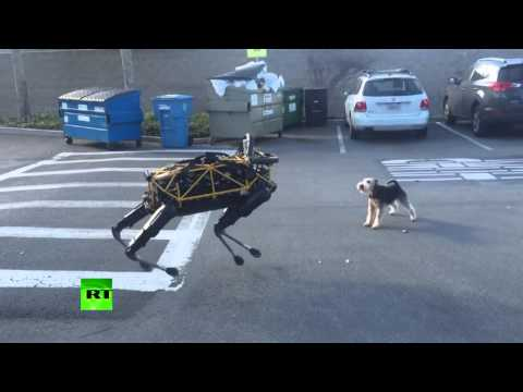 Animal vs Robot: Terrier shows Google robo-dog who's the boss