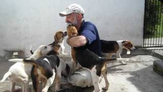 Video Dad Swarmed By Limerick County Foxhound Puppies.avi