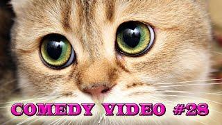 Лучшие приколы года / The best jokes of the year  COMEDY VIDEO #28